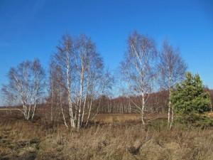 Die Drover Heide