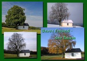 Unser Freund – der Baum