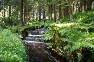 Am Oberharzer Wasserregal