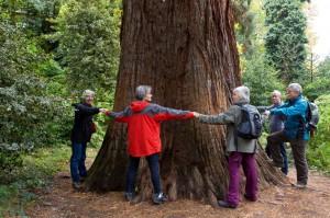 Beim Vermessen einer Sequoia in einem Park in Gleisweiler