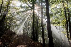 Langsam lösen die Sonnenstrahlen den Nebel auf …