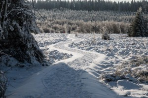 Schneewandern im Polleur-Venn