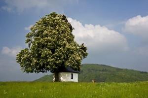 Unser Freund, der Baum, im Frühjahr