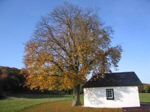 Unser Freund, der Baum, im Herbst