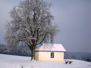 Unser Freund, der Baum, im Winter