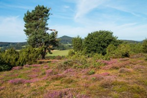 Blick vom Heinrich-Menke-Park auf Hohe Acht und …